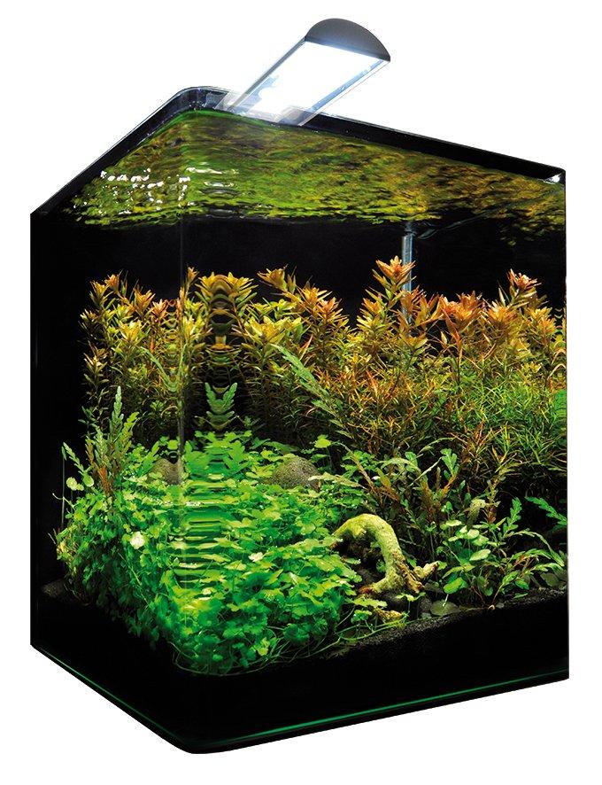 dennerle nano cube 30 l. Black Bedroom Furniture Sets. Home Design Ideas