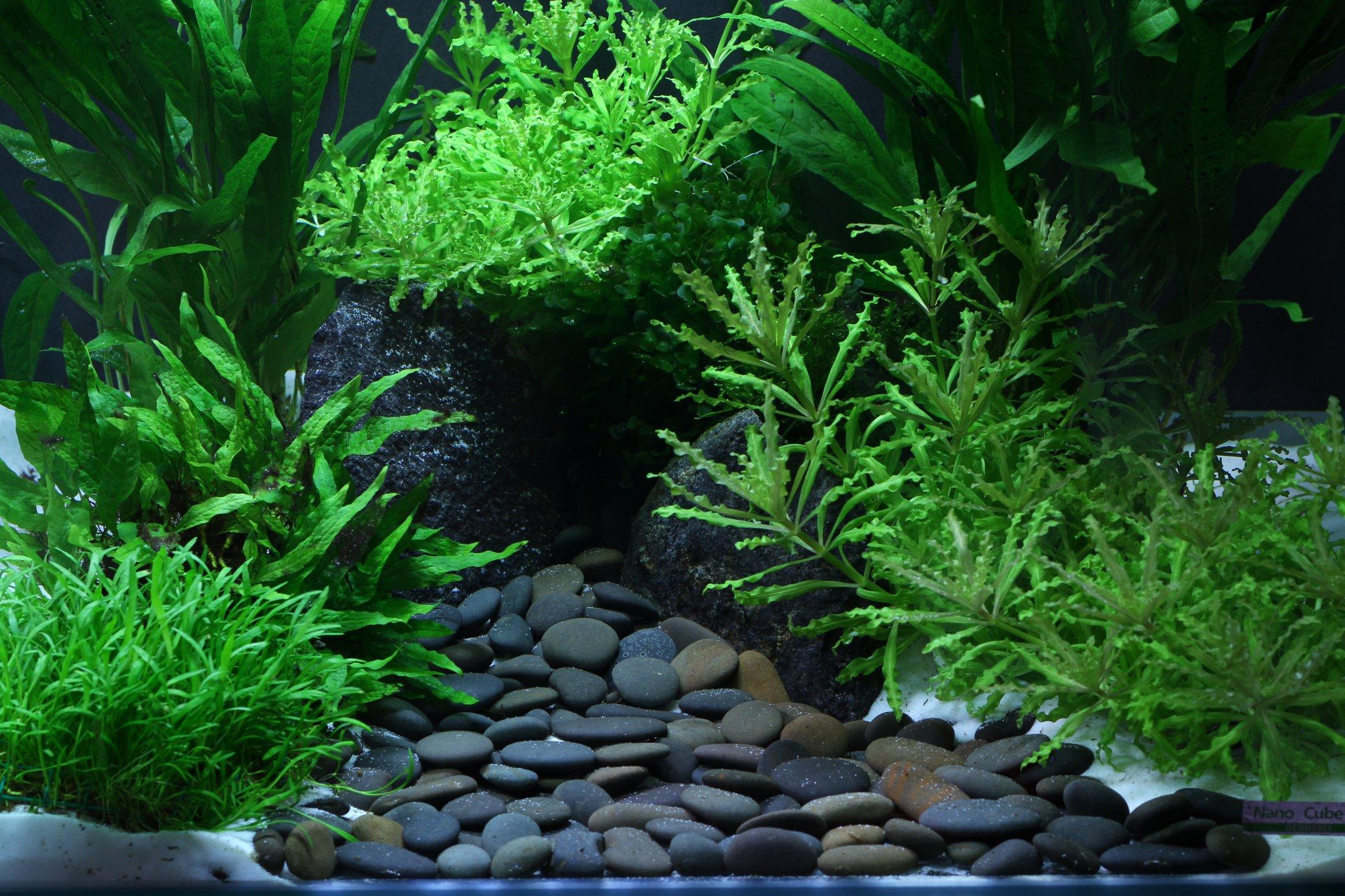 Dennerle yukon natural gravel plantahunter for Boden aquarium