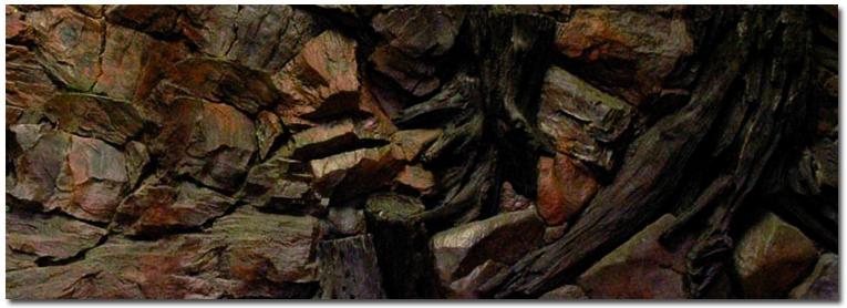 Aquarium 3d background root 150x60 cm - 3d ruckwand aquarium 150x60 ...